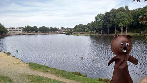 Muscade au bord de l'étang de Châtelaudren